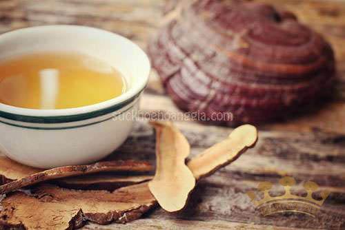 10+ Cách sử dụng nấm linh chi đỏ hiệu quả   Linhchihoanggia