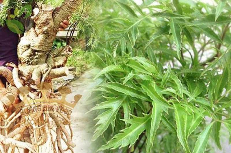 Đinh Lăng: Tác dụng  & Các cách sử dụng  | Linhchihoanggia.com