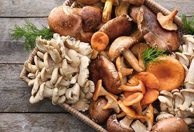 Top 12 Các Loại Nấm dinh dưỡng: Hình ảnh, Công dụng thực tế